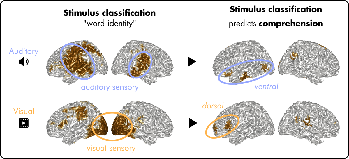"""Out now: The brain separates auditory and visual """"meanings"""" ofwords"""